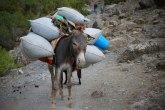 Zašto Kina traži magarce po svetu: Evo šta im je uradila veća platežna sposobnost