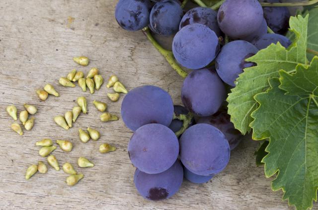 Zašto treba da jedete semenke grožđa?