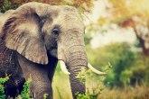 Zastrašujući snimak: Slon je u sekundi pregazio dečaka