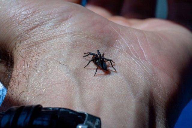 Zatvorena biblioteka, razlog - otrovni paukovi