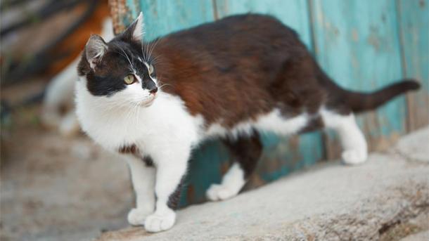 Zbog mačke pola Banjaluke bez struje