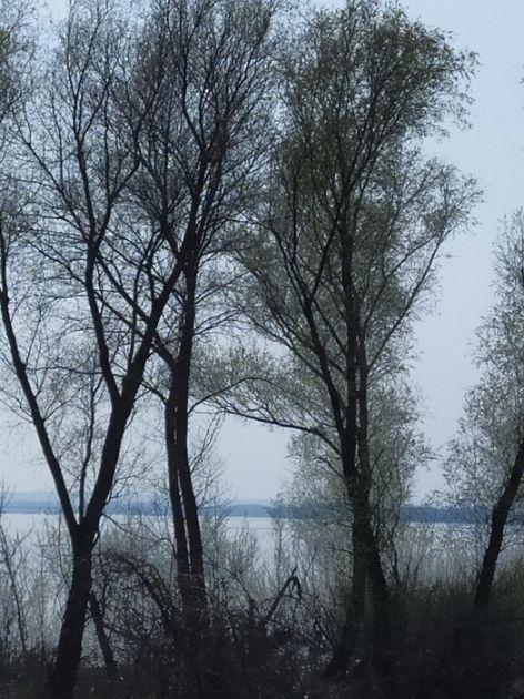 Zbog vetra obustavljena plovidba Dunavom kod Velikog Gradišta