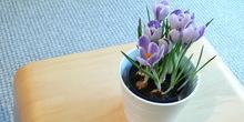 Zbog vrućine češće zalivati cveće