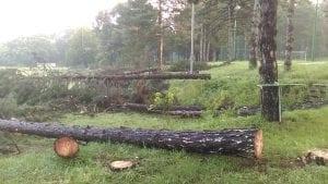 Zelena stranka: Sprema se do sada neviđena seča stabala na Košutnjaku
