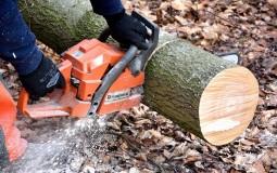 Zelena stranka osudila seču stabala u Košutnjaku, traži referendum o radovima u gradu