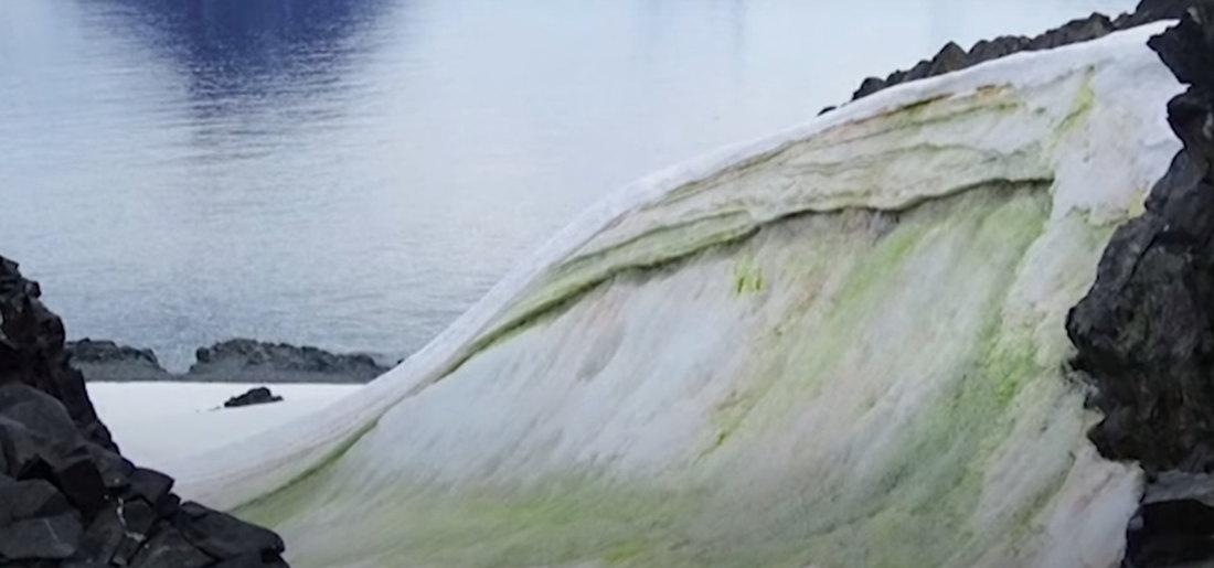 Zeleni sneg na Antarktiku širi se zbog klimatskih promena