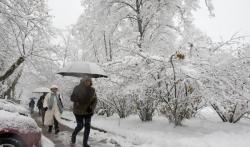 Zelenilo-Beograd uklonilo polomljene grane i stabla na 103 lokacije