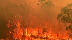 Žestok požar na obali Francuske, turistički kampovi evakuisani