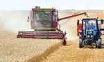 Žito je zlatna budućnost Srbije