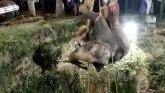 Životinje: Spasavanje slonice koja je upala u bunar
