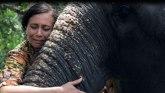"""Životinje i zlostavljanje: Muče slonove do smrti, a onda rone krokodilske suze"""""""