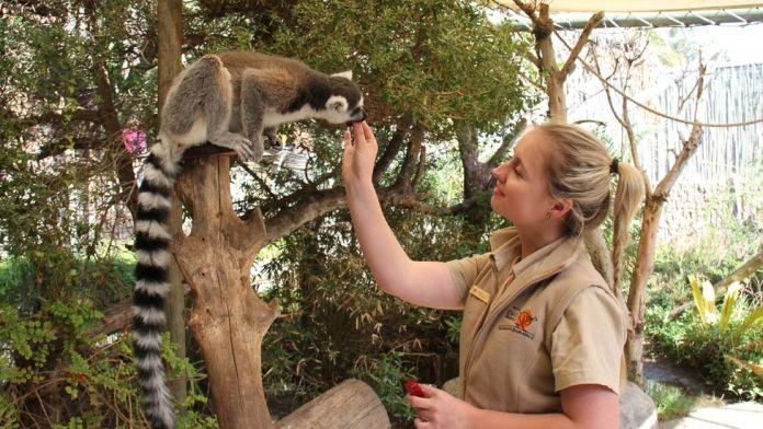 Zoo vrt zbog ekonomske krize morao da otpusti radnike, oni se vratili i besplatno nastavili da brinu o životinjama