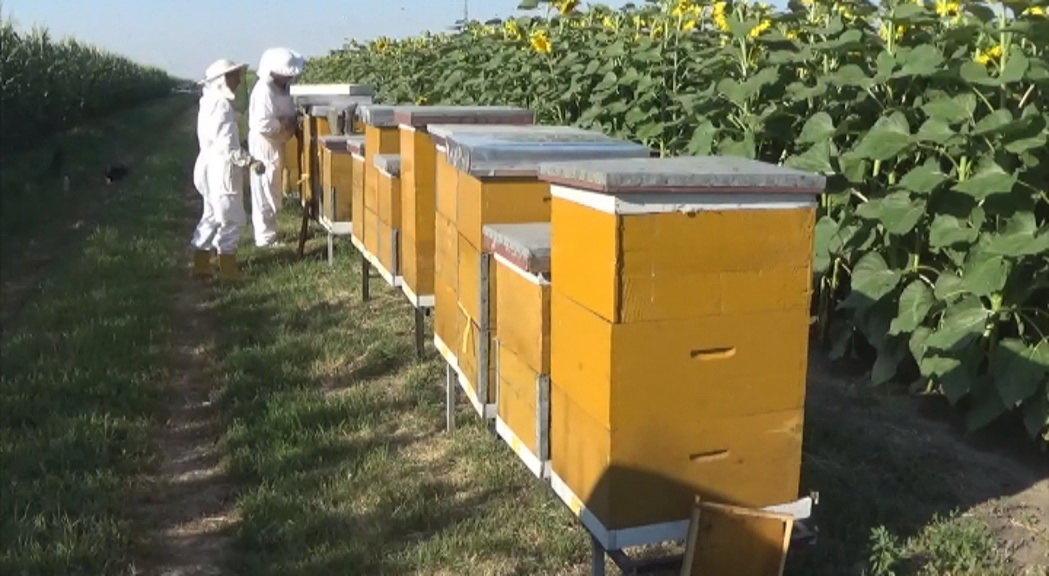 Zrenjanin nastavlja da podstiče pčelarsku proizvodnju