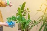 Žuti listovi, mekana stabljika: Biljke signaliziraju da im je previše vode