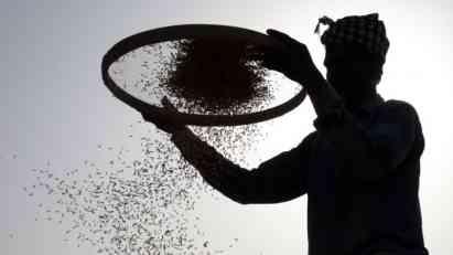 Alarm za hranu zbog nestanka životinja i biljki