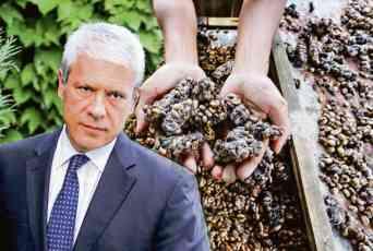 BIVŠI PREDSEDNIK NAŠAO POSAO: Boris Tadić prodaje kafu od mačjeg izmeta! ČITAJTE U KURIRU