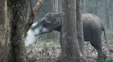 Bizarno ponašanje slona ostavilo naučnike bez odgovora