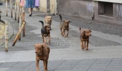 Film o osudjenicima koji dresiraju pse prikazan štićenicima doma u Kruševcu