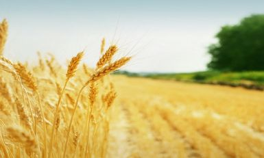 Fond za razvoj poljoprivrede Vojvodine raspisao 11 konkursa