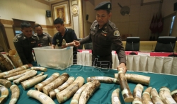 Interpol: 92 države u velikoj operaciji protiv ilegalne trgovine divljim životinjama (VIDEO)