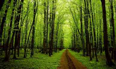Kako spasiti planetu? Naučnici predlažu sadnju 1,2 biliona drveća