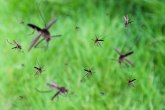 Kruševac: Tretman suzbijanja komaraca sa zemlje
