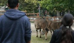 Migranti iz Bogovadje obišli zoološki vrt u Beogradu (VIDEO)