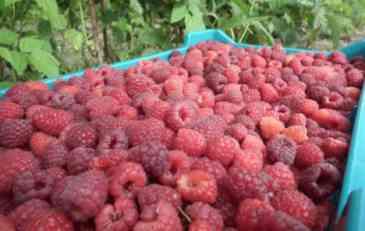 Ministarstvo poljoprivrede Srbije: Izvoz voća i povrća u Rusiju nije ograničen