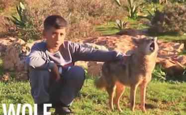 NEVEROVATNA PRIČA O DEČAKU I VUKU: Pripitomio ga i sad zajedno čuvaju ovce (VIDEO)