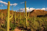 Na ovom mestu se kaktusi toliko kradu,da su ih mikročipovali