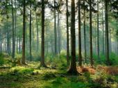 Neverovatno, ali istinito: Četvrtina Srbije pod šumom, a drvnu građu kupuje od Nemaca