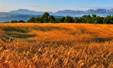 Osnaživanje poljoprivrede u Srbiji