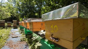 Otvoren prvi azil za pčele u Beogradu
