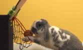 Ovaj kunić igra košarku bolje od mnogih ljudi (VIDEO)