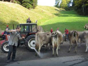 Ovo je SPECIJALAN dan kada se Švajcarci okupe da pozdrave KRAVE
