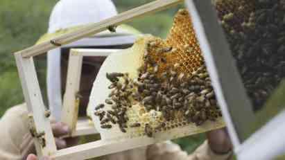 Pesticidi u zalihama meda širom sveta
