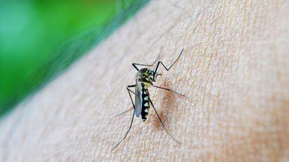 Počinje akcija suzbijanja larvi komaraca u Boru