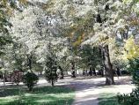 Poslanik SNS-a iz Vranja nazvao idiotima one koji se bore protiv seče stabala u parku