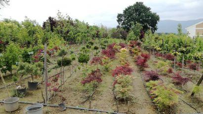 Proizvodnja magnolija zaštitni znak porodice Stanojčić