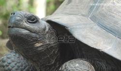 Pronadjena kornjača za koju se mislilo da je izumrla (VIDEO)