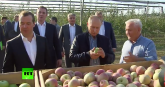Putin u voćnjaku: Kako su jabuke tako ogromne? VIDEO