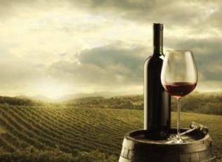 Razvoju turizma u Trebinju doprinosi 16 vinarija