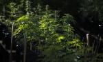 SRBI UHAPŠENI U ŠPANIJI: Krali struju da bi gajili marihuanu