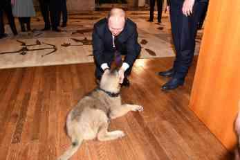 Šarplaninac Paša u Rusiju otišao iz Petrovaradina (VIDEO)