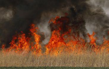 Stradao muškarac u Trsteniku, požar na otvorenom