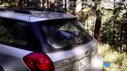 Subaru u borbi s medvedom (VIDEO)