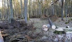 Sud: Poljska krši evropski zakon u slučaju Bjalovješke šume