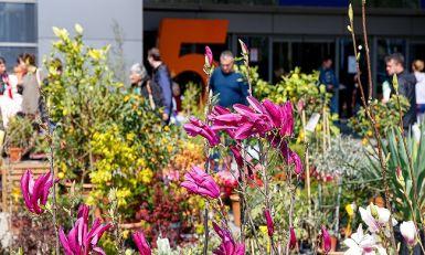 Sunce i cveće se vraćaju kući – bašta u srcu sajma