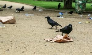 U Jagodinu došlo 10.000 vrana, prekrile su nebo, opsedaju drveće i krovove kuća