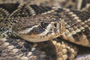 U Leskovcu sve više ujeda zmija, ima i otrovnica